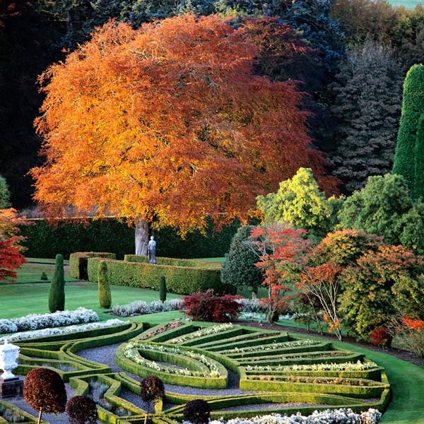Queen-Victoria-planted-tree